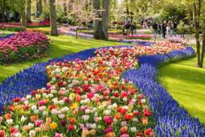 În Tara lalelelor bursa de flori s-a prăbușit