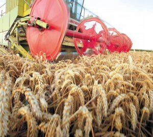Fermierii sunt obligați să își declare periodic stocul de cereale, altfel riscă amenzi usturătoare