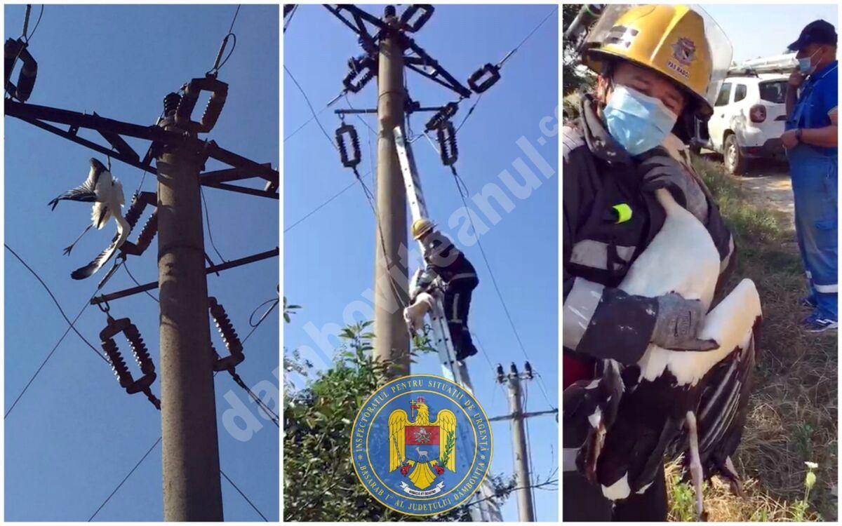 Acțiune de salvare a unei berze în localitatea Bilciurești