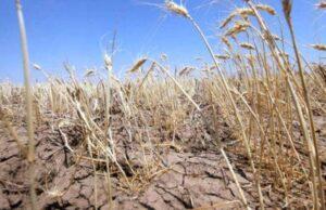 Despăgubirile de secetă nu sunt prevăzute în rectificarea bugetară