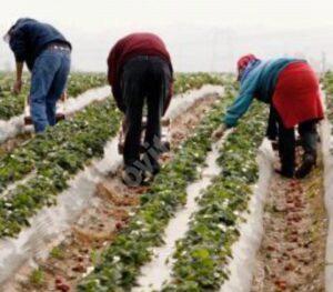 Zeci de muncitori români depistați pozitiv cu Covid-19, la o fermă din Marea Britanie