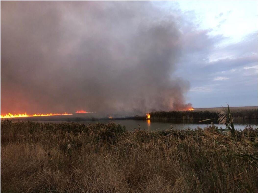 Video: Incendiu violent în Delta Dunării