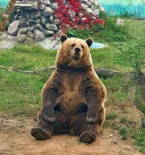 În acest weekend vizitează Grădina Zoologică din Târgoviște!