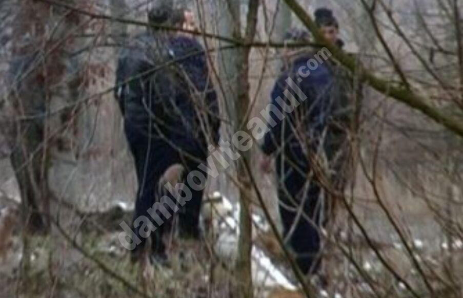 DÂMBOVIȚA: Bărbați sancționați pentru ilegalități în domeniul silviculturii