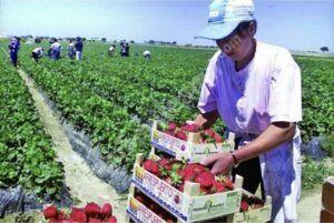 900 locuri de muncă în domeniul agricol (recoltare fructe) în Spania- firma SUREXPORT, prin intermediul Reţelei EURES ROMÂNIA