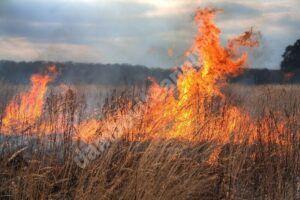 Garda de Mediu: arderea frunzelor de la curăţenia de primăvară este interzisă, fiind considerată poluare
