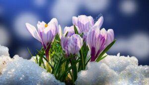 Iarna ne mai pregătește o răbufnire, în județul Dâmbovița
