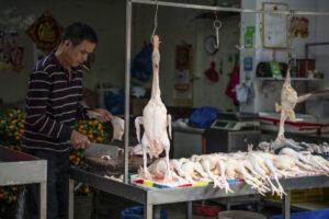 OMS vrea interzicerea vânzării de animale vii în piețe: Sunt sursa a 70% dintre bolile și virusurile nou apărute