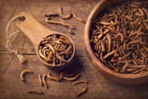 Comisia Europeană a autorizat utilizarea viermilor de făină galbeni, uscați, ca aliment