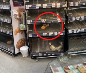 Doi șobolani se înfruptă nestingheriți dintr-un raft al unui magazin Mega Image. Vezi reacția conducerii magazinului