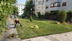 Asociațiile de proprietari din municipiul Oradea vor fi obligate să întrețină spațiile verzi din jurul blocurilor de locuinţe